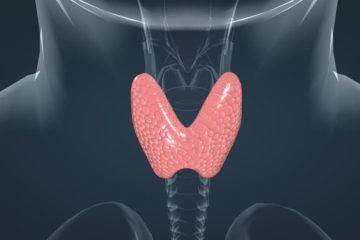 Щитовидная железа и армия